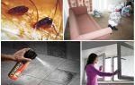 Блохи в квартире — чем и как обработать помещение?