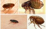 Домашние муравьи — чем лучше всего их травить?
