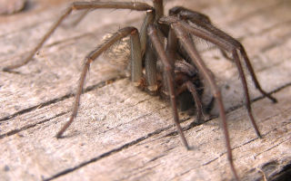Как избавиться от пауков дома?