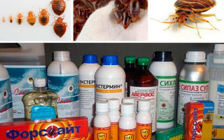 Дезинфекция от блох в квартире — самые эффективные средства