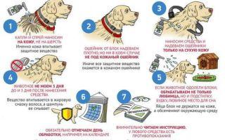 Как защитить собаку от клещей?