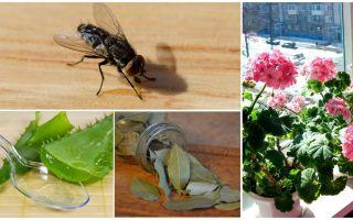 Отпугнуть мух — какие запахи помогут?