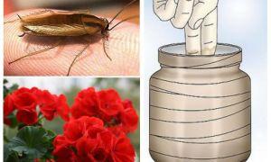 Борьба с тараканами — народные средства