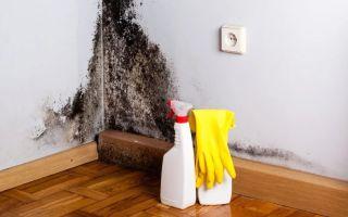 Как избавиться от черной плесени на стенах?