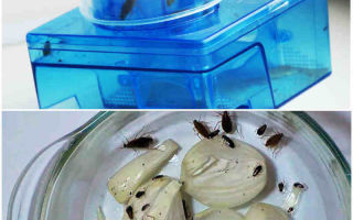 Ловушки для тараканов — какие из них самые эффективные?