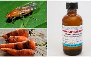Эффективные способы избавления от морковной блошки