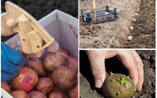 Чем обработать картофель от колорадского жука?
