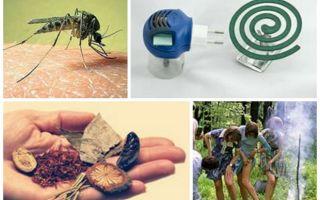 Как избавиться от комаров в квартире?