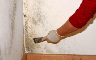 Плесень на стенах в квартире — чем убрать?