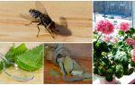 Какой запах отпугивает комаров?