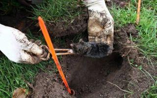 На садовом участке появился крот — способы борьбы
