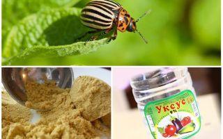 Борьба народными средствами с колорадским жуком