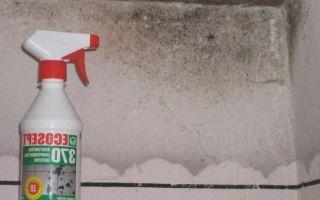 Как избавиться от запаха плесени в доме?