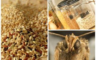 Как избавиться от кухонной (фруктовой или продуктовой) моли?