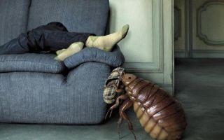 Почему в диване заводятся клопы?